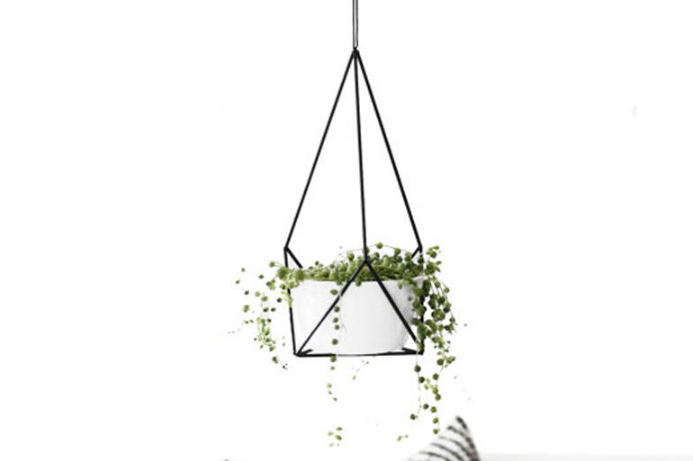 O trouver des himmelis h ll blogzine for Ou acheter des plantes